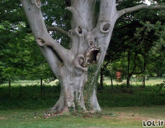 Ar čia tikrai medžiai?