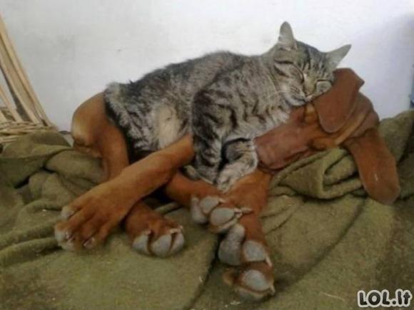 Katės ir šunys vienuose namuose