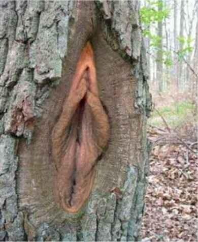 Nešvankybės gamtoje