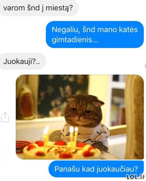 Katės gimtadienis