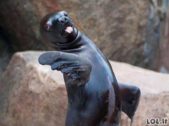 Nefotogeniškiausių gyvūnų galerija