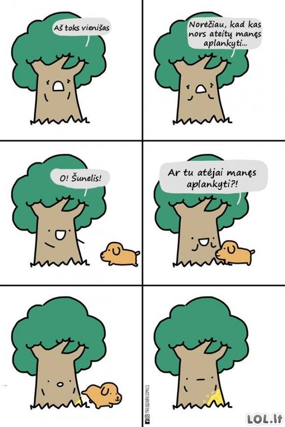 Naujas medžio draugas