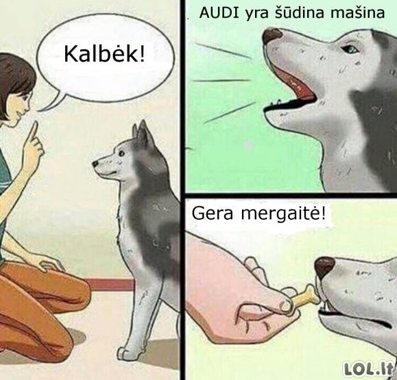 Protingas šuo
