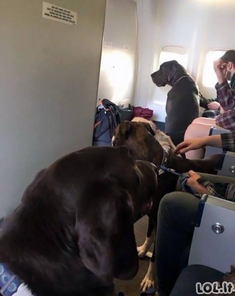 Geriausi lėktuvų keleiviai