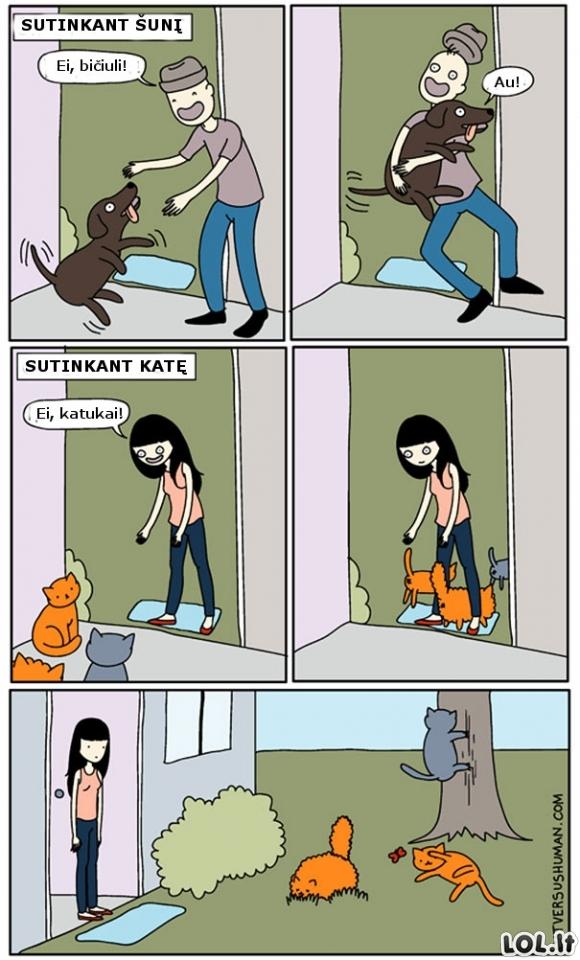 Šunų ir kačių skirtumai