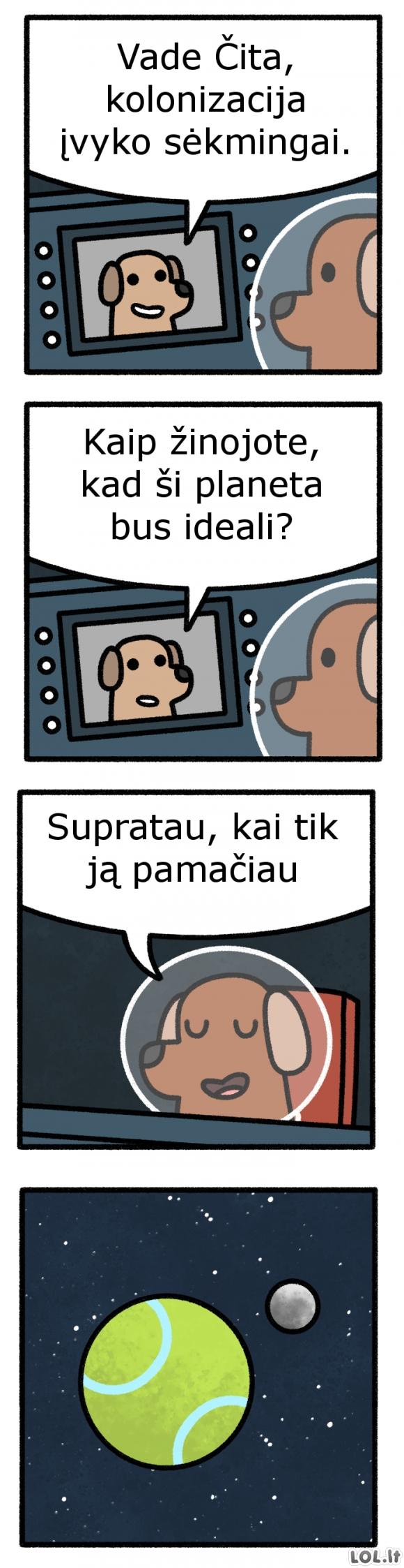Šunų kolonizacija
