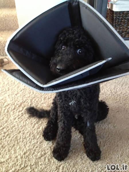 Gyvūnai, kątik grįžę iš veterinaro