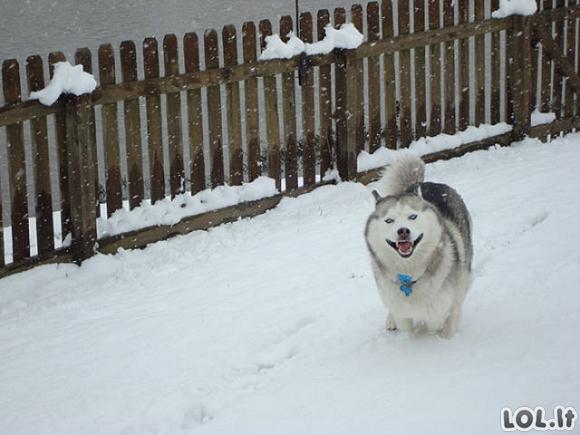 Gyvūnai pirmą kartą pamato sniegą