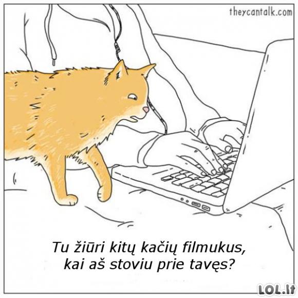 Kačių filmukai