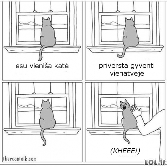 Vieniša katė