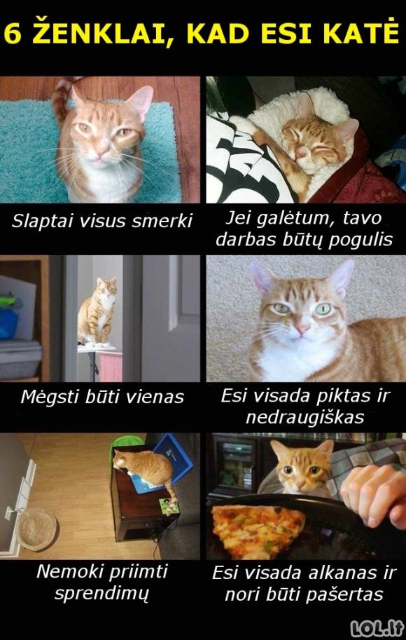 6 ženklai, kad esi katė
