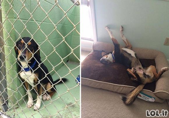 Kai šunų paėmimas į globą pakeičia jų gyvenimus [20 FOTO]