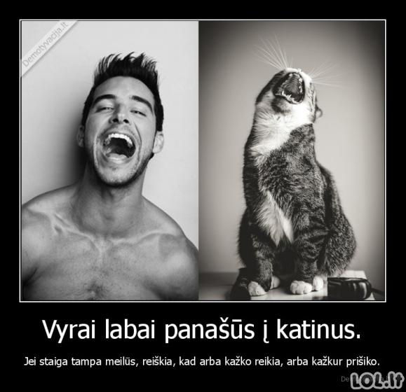Vyrų ir katinų panašumas