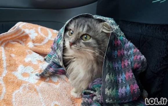 Iš mirties gniaužtų ištrauktas katiniukas