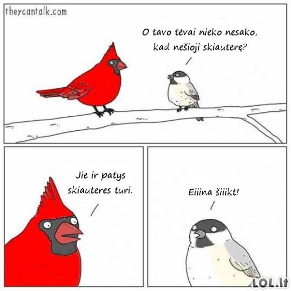 Kieta paukščių šeimynėlė