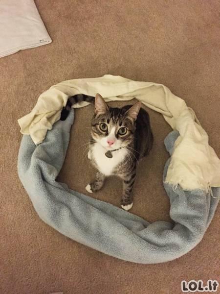 Katės ir geometrija [GALERIJA]