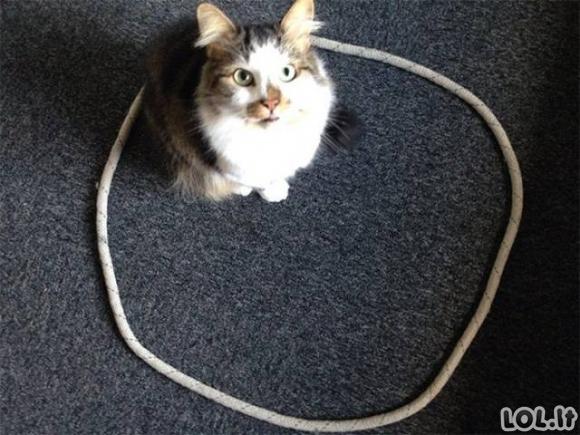 """""""Katės mėgsta geometrines figūras"""" galerija"""