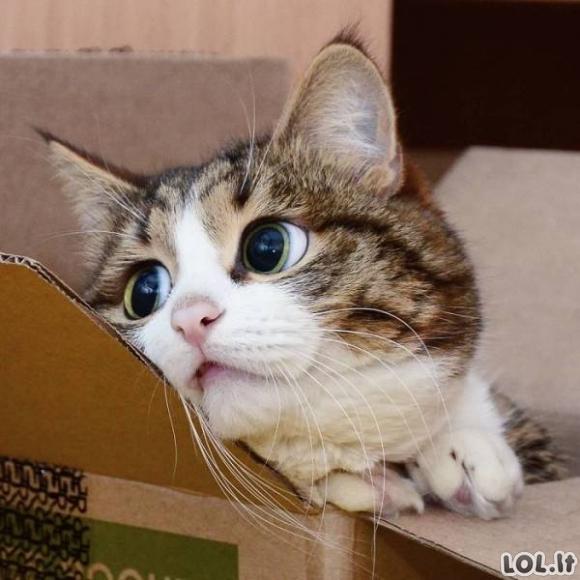 Mieliausias katiniukas pasaulyje [41 FOTO]