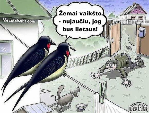 Paukščiai - sinoptikai