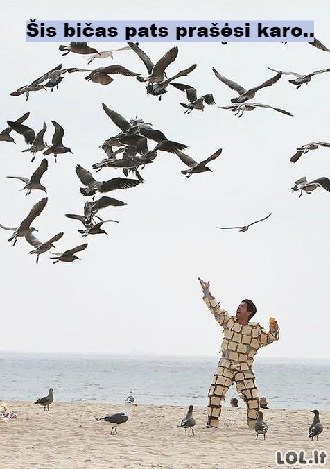 Karas su žuvėdromis