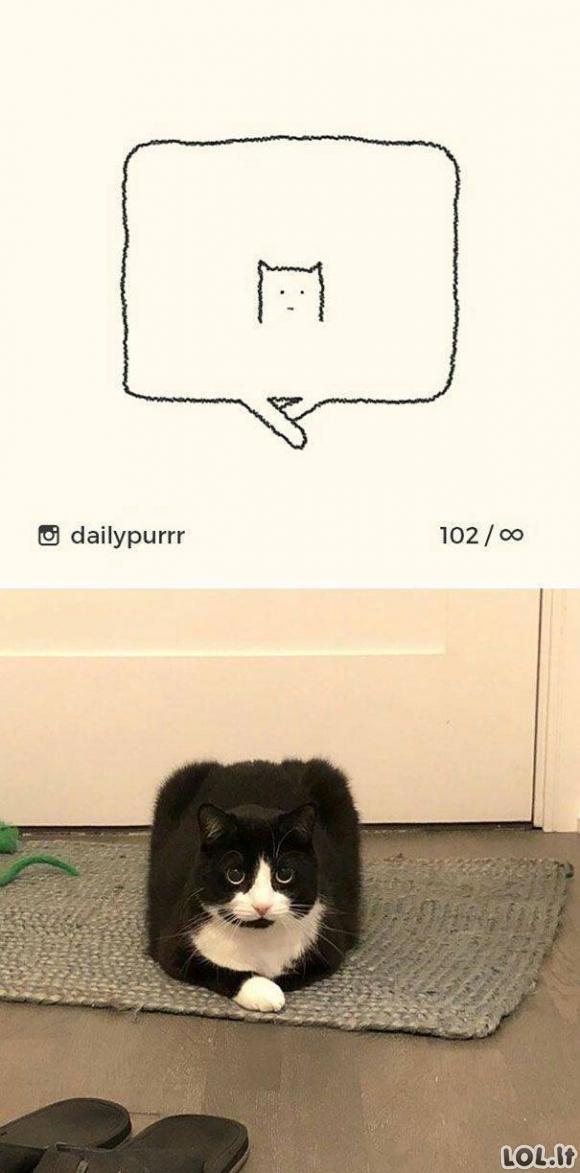 Kvaili katinų piešiniai ir jų realios nuotraukos [25 nuotraukos]