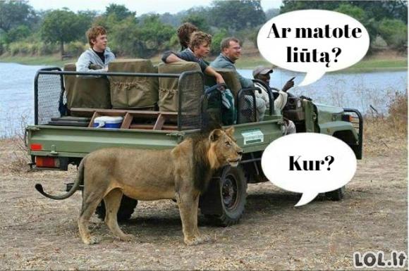 Ekskursija Afrikoje