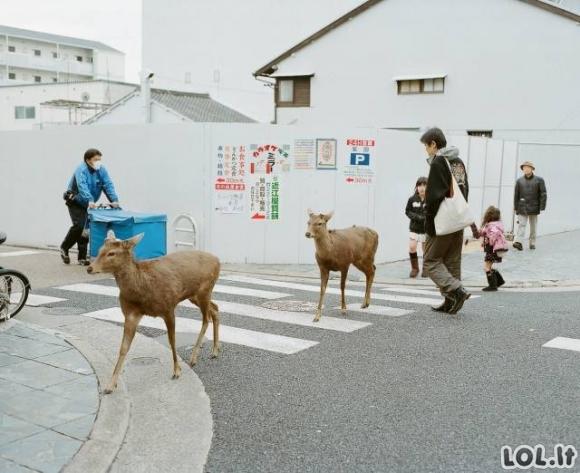 FOTO PERLIUKAI [20 FOTO]