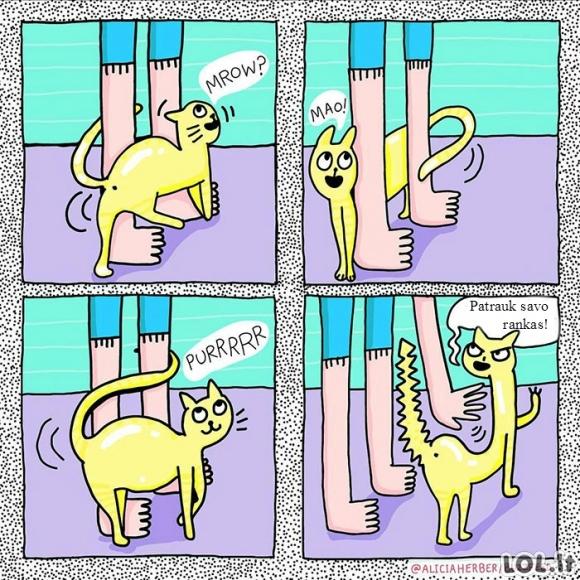 Katinų glaustymosi logika