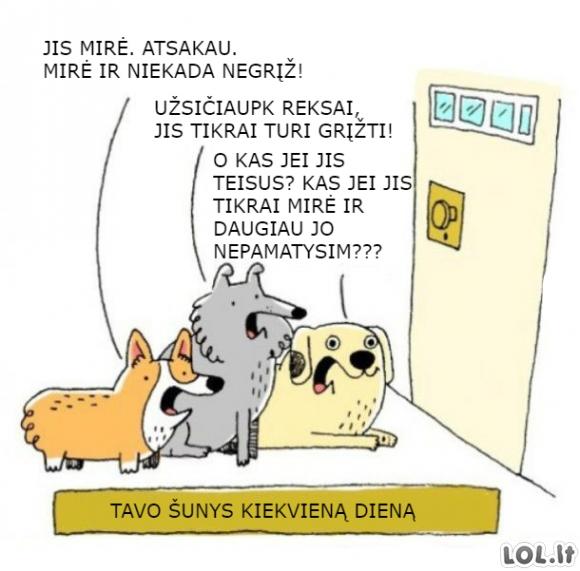 Tavo šunys kiekvieną dieną
