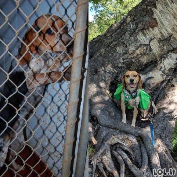 Kaip pasikeitė gyvūnai, kurie buvo paimti iš prieglaudos [24 nuotraukos]