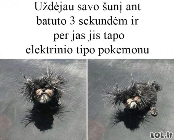 Šuo tapo pokemonu