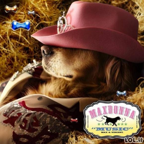Madonną atkartojantis šuo [22 nuotraukos]