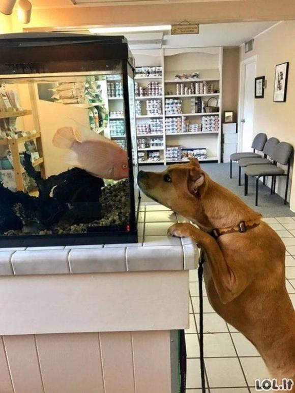 Kai gyvūnai supranta, jog važiuoja pas veterinarą [GALERIJA]