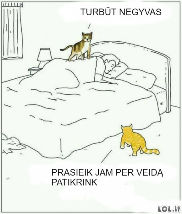 Katinai rūpinasi