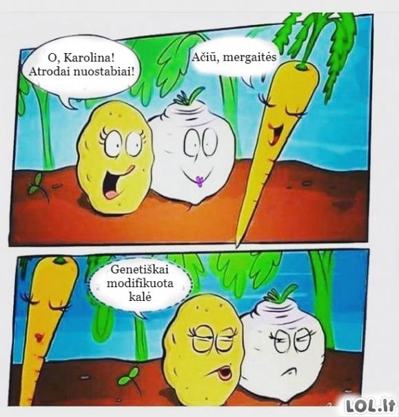 Draugės daržovės
