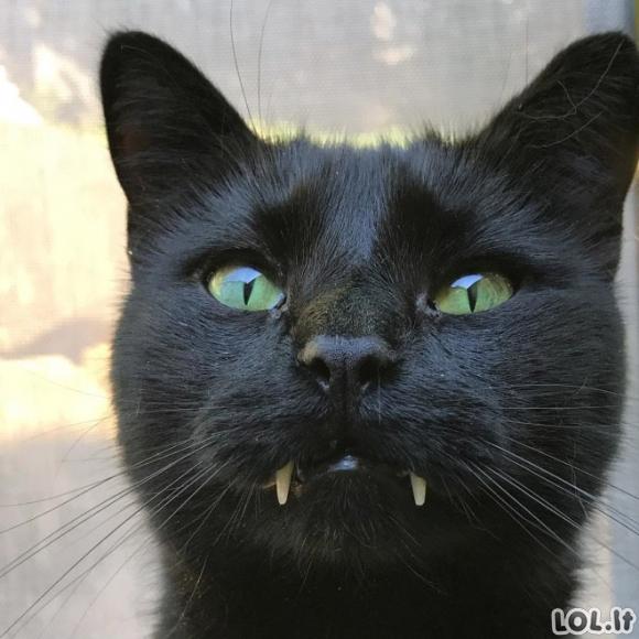Katinai - vampyrai (18 nuotraukų)