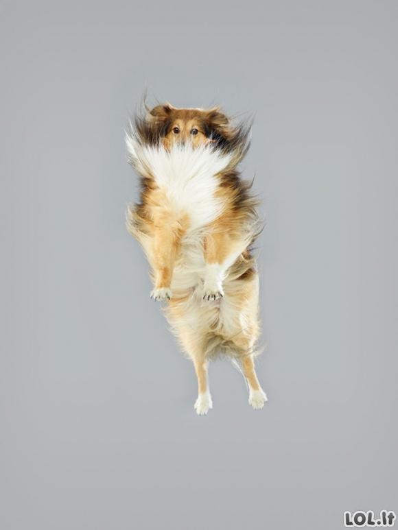 Šunys ant batutų
