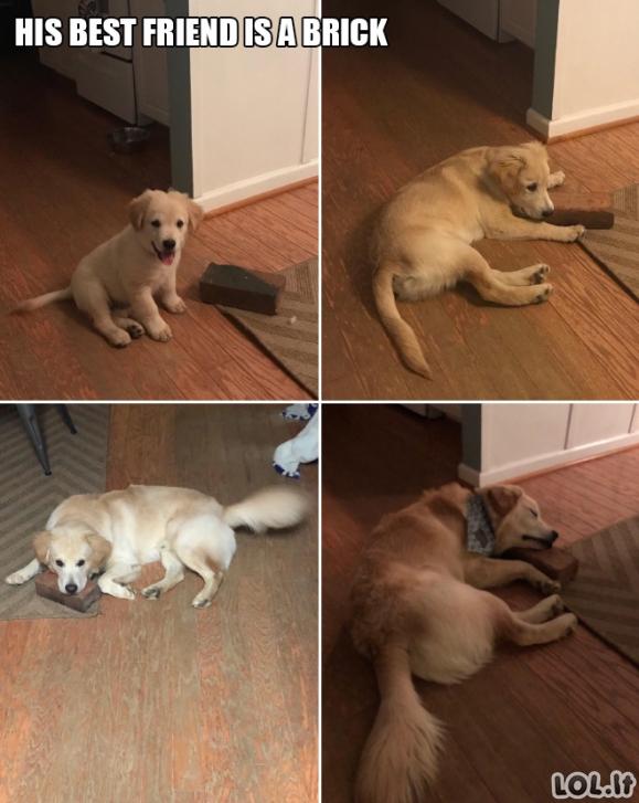 Juokinga šunų galerija (18 vaizdelių)