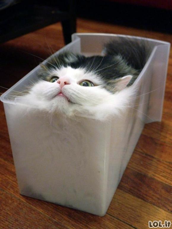 Įrodymas, jog katės yra skystis (20 vaizdelių)