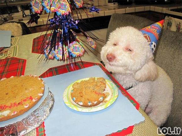 Šunys ir jų didžiulė meilė maistui (21 nuotrauka)