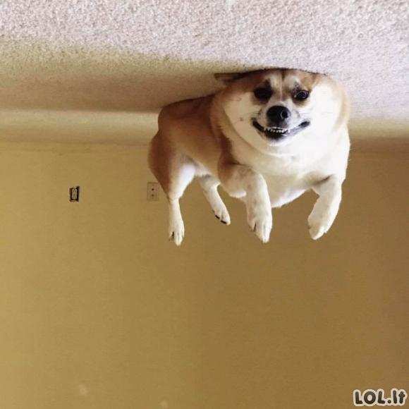 Šunys - balionėliai (17 nuotraukų)