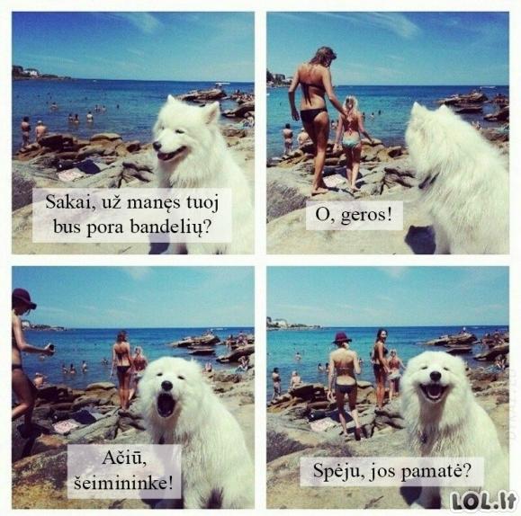 Žvalgyba su šunimi