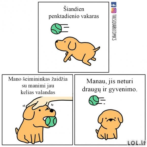 Šeimininkas žaidžia su šunimi