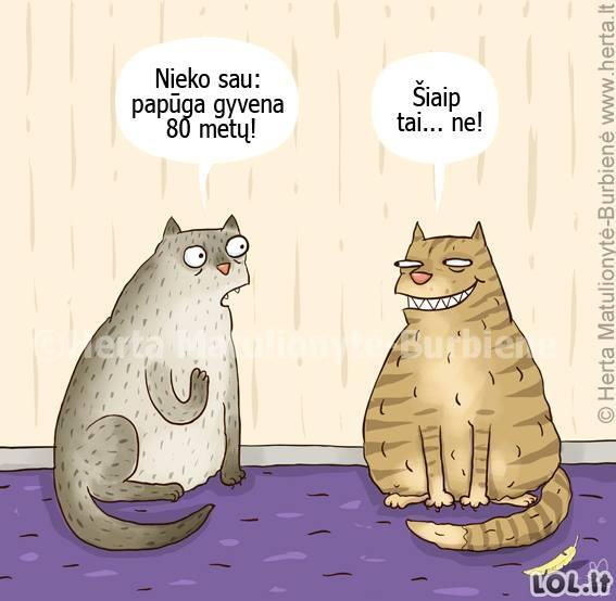 Katinai ir papūgos