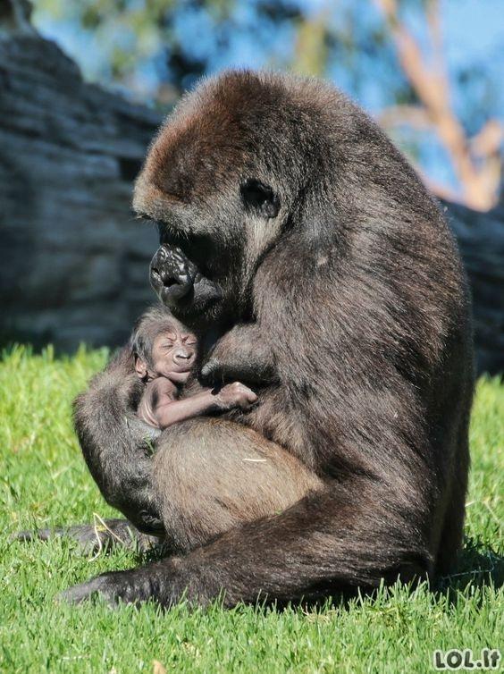 Mielos gyvūnų jauniklių fotografijos (21 nuotrauka)