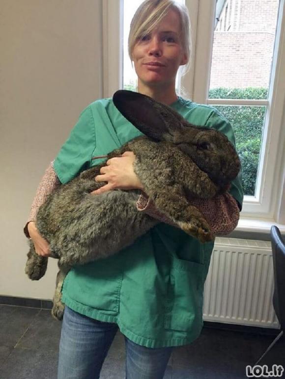 Mieli gyvūnai veterinarijos klinikose (20 nuotraukų)