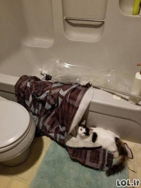 Gyvūnai negali būti nuobodūs [GALERIJA]