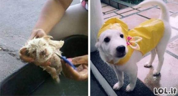 Meilė gyvūnams gali juos pakeisti [GALERIJA]