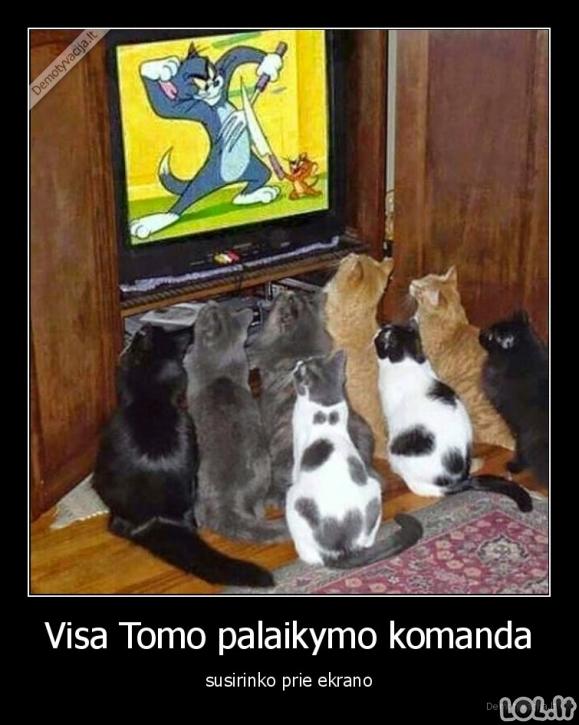 Tomo palaikymo komanda