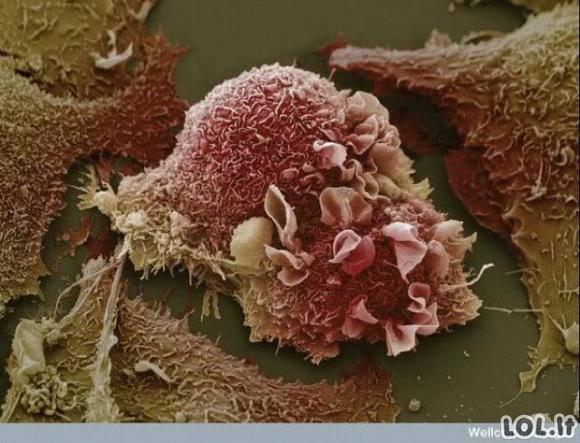Pažvelkime į savo kūną per mikroskopą [nuotraukų galerija]